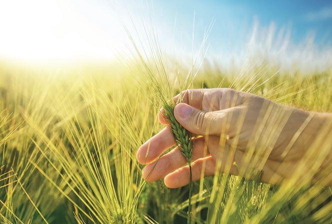 Delfan Plus – Agentul anti-stres la culturile de câmp