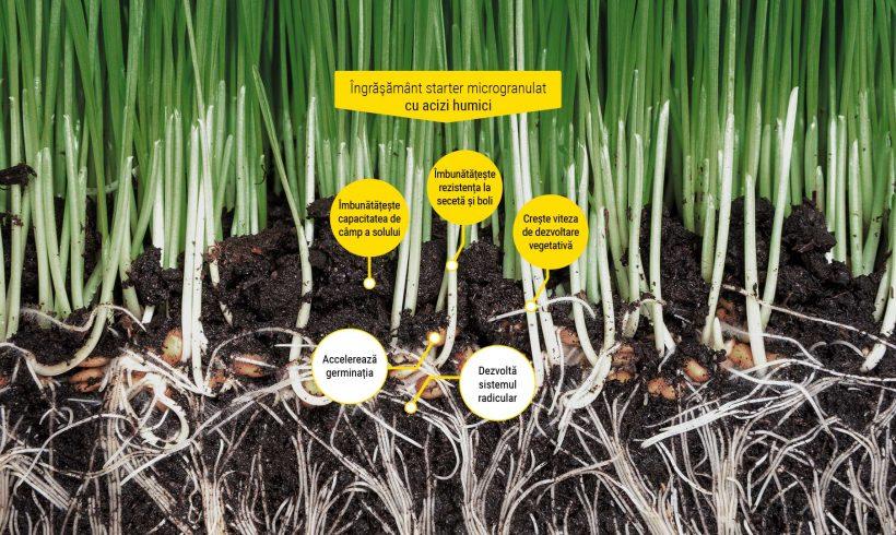 Seed Sprint – Îngrășământ starter microgranulat