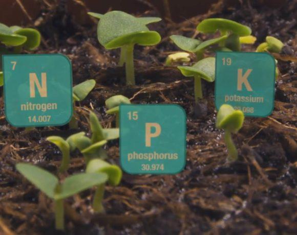 Soluţii eficiente pentru a mări aportul de azot și fosfor atât de indispensabil plantelor
