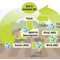 AZOFIX- Fixeaza azotul