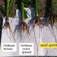 Aportul de fosfor garantează un demaraj în forţă la răsărire!