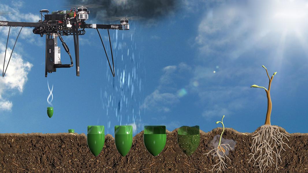 dronele planteaza copaci