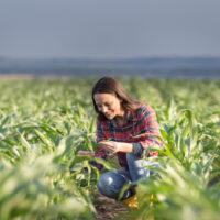 Soluţii de finanţare BCR pentru agricultura românească