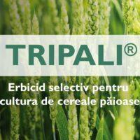 TRIPALI® – Erbicid selectiv pentru cultura de cereale păioase